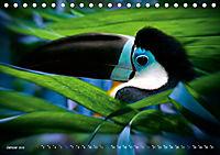 Dschungelleben - Tierportraits (Tischkalender 2019 DIN A5 quer) - Produktdetailbild 1