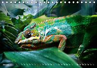 Dschungelleben - Tierportraits (Tischkalender 2019 DIN A5 quer) - Produktdetailbild 6