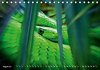 Dschungelleben - Tierportraits (Tischkalender 2019 DIN A5 quer) - Produktdetailbild 8