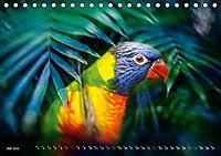 Dschungelleben - Tierportraits (Tischkalender 2019 DIN A5 quer) - Produktdetailbild 7