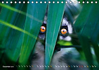 Dschungelleben - Tierportraits (Tischkalender 2019 DIN A5 quer) - Produktdetailbild 12