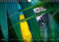 Dschungelleben - Tierportraits (Wandkalender 2019 DIN A4 quer) - Produktdetailbild 5