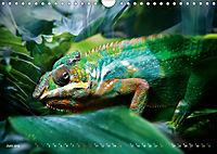Dschungelleben - Tierportraits (Wandkalender 2019 DIN A4 quer) - Produktdetailbild 6