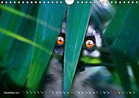 Dschungelleben - Tierportraits (Wandkalender 2019 DIN A4 quer) - Produktdetailbild 12