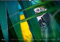Dschungelleben - Tierportraits (Wandkalender 2019 DIN A2 quer) - Produktdetailbild 5
