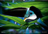 Dschungelleben - Tierportraits (Wandkalender 2019 DIN A2 quer) - Produktdetailbild 1
