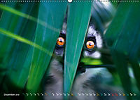 Dschungelleben - Tierportraits (Wandkalender 2019 DIN A2 quer) - Produktdetailbild 12