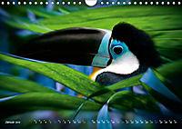 Dschungelleben - Tierportraits (Wandkalender 2019 DIN A4 quer) - Produktdetailbild 1