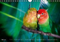 Dschungelleben - Tierportraits (Wandkalender 2019 DIN A4 quer) - Produktdetailbild 3
