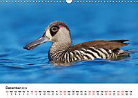Duck Parade (Wall Calendar 2019 DIN A3 Landscape) - Produktdetailbild 12