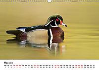Duck Parade (Wall Calendar 2019 DIN A3 Landscape) - Produktdetailbild 5
