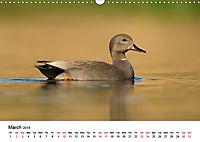 Duck Parade (Wall Calendar 2019 DIN A3 Landscape) - Produktdetailbild 3