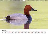Duck Parade (Wall Calendar 2019 DIN A3 Landscape) - Produktdetailbild 7
