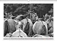 Dülmener Wildpferde im Münsterland in schwarz und weiß (Wandkalender 2019 DIN A3 quer) - Produktdetailbild 1