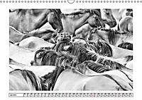 Dülmener Wildpferde im Münsterland in schwarz und weiß (Wandkalender 2019 DIN A3 quer) - Produktdetailbild 6