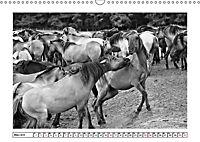 Dülmener Wildpferde im Münsterland in schwarz und weiß (Wandkalender 2019 DIN A3 quer) - Produktdetailbild 11