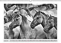 Dülmener Wildpferde im Münsterland in schwarz und weiß (Wandkalender 2019 DIN A3 quer) - Produktdetailbild 5