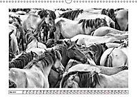 Dülmener Wildpferde im Münsterland in schwarz und weiß (Wandkalender 2019 DIN A3 quer) - Produktdetailbild 8