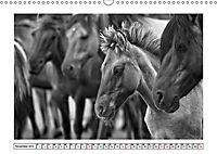 Dülmener Wildpferde im Münsterland in schwarz und weiß (Wandkalender 2019 DIN A3 quer) - Produktdetailbild 10