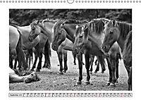 Dülmener Wildpferde im Münsterland in schwarz und weiß (Wandkalender 2019 DIN A3 quer) - Produktdetailbild 13