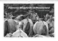 Dülmener Wildpferde im Münsterland in schwarz und weiß (Wandkalender 2019 DIN A3 quer), Bettina Hackstein