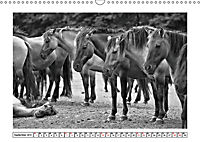 Dülmener Wildpferde im Münsterland in schwarz und weiss (Wandkalender 2019 DIN A3 quer) - Produktdetailbild 9