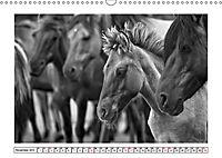 Dülmener Wildpferde im Münsterland in schwarz und weiss (Wandkalender 2019 DIN A3 quer) - Produktdetailbild 11