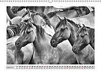 Dülmener Wildpferde im Münsterland in schwarz und weiss (Wandkalender 2019 DIN A3 quer) - Produktdetailbild 1