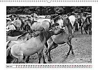 Dülmener Wildpferde im Münsterland in schwarz und weiss (Wandkalender 2019 DIN A3 quer) - Produktdetailbild 3