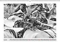 Dülmener Wildpferde im Münsterland in schwarz und weiss (Wandkalender 2019 DIN A3 quer) - Produktdetailbild 7