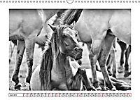 Dülmener Wildpferde im Münsterland in schwarz und weiss (Wandkalender 2019 DIN A3 quer) - Produktdetailbild 6