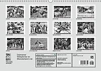 Dülmener Wildpferde im Münsterland in schwarz und weiss (Wandkalender 2019 DIN A3 quer) - Produktdetailbild 13