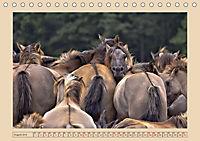 Dülmener Wildpferde im Münsterland (Tischkalender 2019 DIN A5 quer) - Produktdetailbild 8