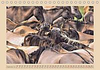 Dülmener Wildpferde im Münsterland (Tischkalender 2019 DIN A5 quer) - Produktdetailbild 9