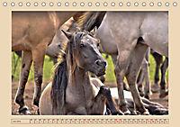 Dülmener Wildpferde im Münsterland (Tischkalender 2019 DIN A5 quer) - Produktdetailbild 7
