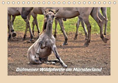 Dülmener Wildpferde im Münsterland (Tischkalender 2019 DIN A5 quer), Bettina Hackstein