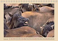 Dülmener Wildpferde im Münsterland (Tischkalender 2019 DIN A5 quer) - Produktdetailbild 2