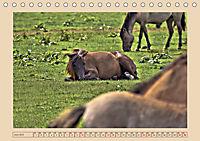 Dülmener Wildpferde im Münsterland (Tischkalender 2019 DIN A5 quer) - Produktdetailbild 6
