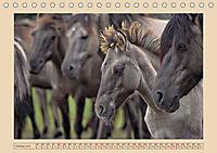 Dülmener Wildpferde im Münsterland (Tischkalender 2019 DIN A5 quer) - Produktdetailbild 10