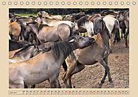 Dülmener Wildpferde im Münsterland (Tischkalender 2019 DIN A5 quer) - Produktdetailbild 4
