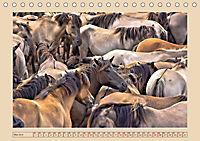 Dülmener Wildpferde im Münsterland (Tischkalender 2019 DIN A5 quer) - Produktdetailbild 5