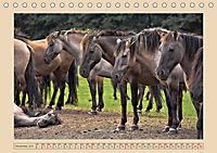 Dülmener Wildpferde im Münsterland (Tischkalender 2019 DIN A5 quer) - Produktdetailbild 11