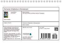 Dülmener Wildpferde im Münsterland (Tischkalender 2019 DIN A5 quer) - Produktdetailbild 13