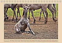 Dülmener Wildpferde im Münsterland (Tischkalender 2019 DIN A5 quer) - Produktdetailbild 12