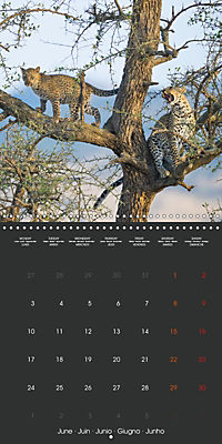 East African Nature (Wall Calendar 2019 300 × 300 mm Square) - Produktdetailbild 6