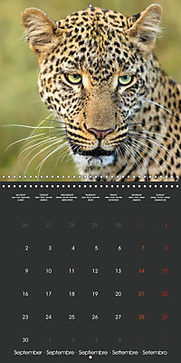 East African Nature (Wall Calendar 2019 300 × 300 mm Square) - Produktdetailbild 9