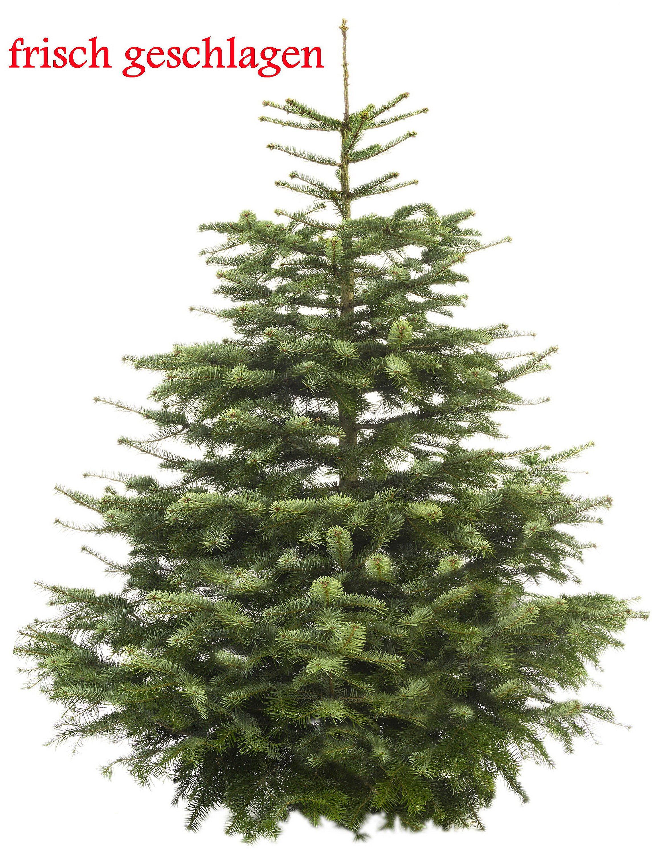 Weihnachtsbaum Nordmanntanne.Echter Weihnachtsbaum Nordmanntanne Premium 150 175 Cm Geschlagen