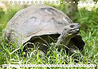 Ecuadors Tierwelt (Tischkalender 2019 DIN A5 quer) - Produktdetailbild 6