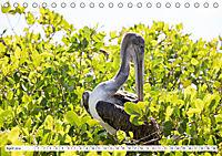 Ecuadors Tierwelt (Tischkalender 2019 DIN A5 quer) - Produktdetailbild 4