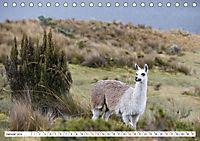 Ecuadors Tierwelt (Tischkalender 2019 DIN A5 quer) - Produktdetailbild 1